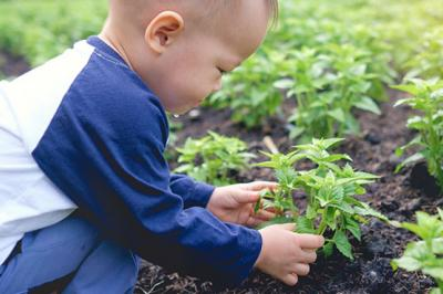 Planting your own food is fun for both parents and kids.